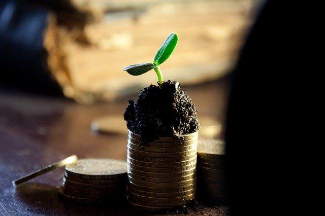 planta que crece como el dinero