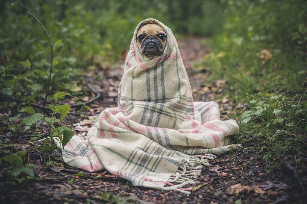 Perro tapado con manta